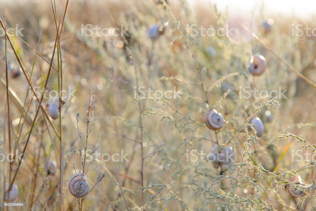много улиток на сухой траве stock photo
