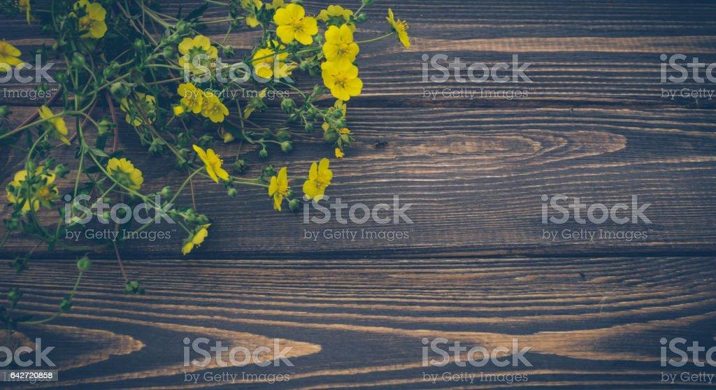 Праздничный фон с желтыми цветами stock photo