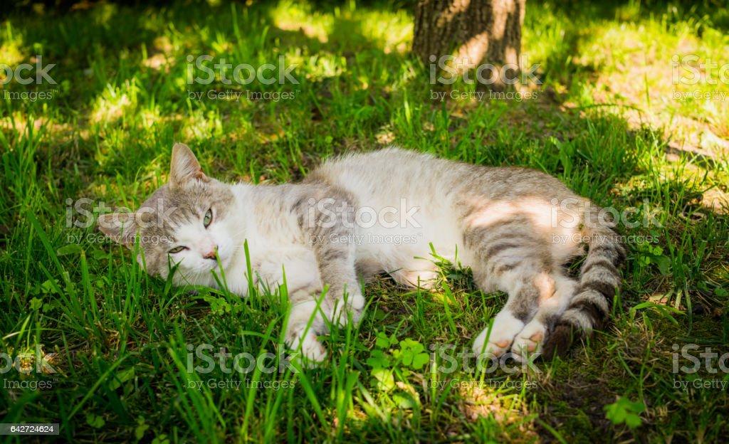 Ленивый деревенский кот stock photo