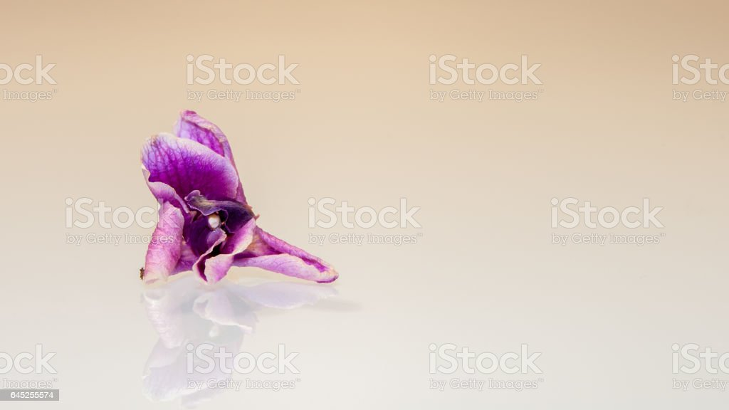 REFLECTION OF AN ORCHID stock photo