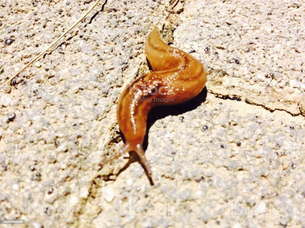 민달팽이 stock photo