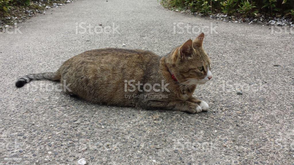 座っている猫 stock photo