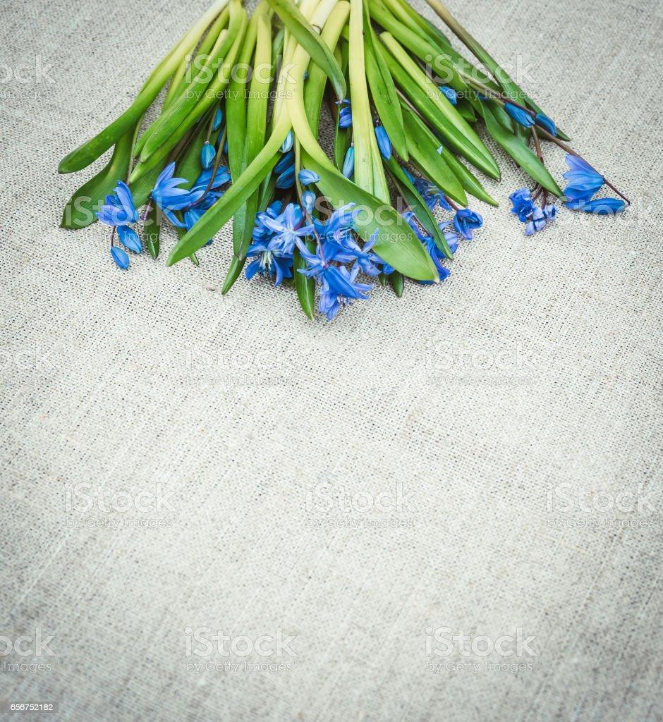 Праздничная пасхальная открытка с весенними цветами. Синие пролески и льняная ткань stock photo