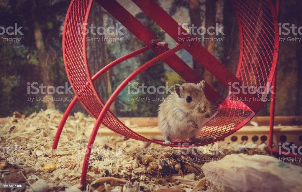 Маленький забавный домашний мышонок stock photo