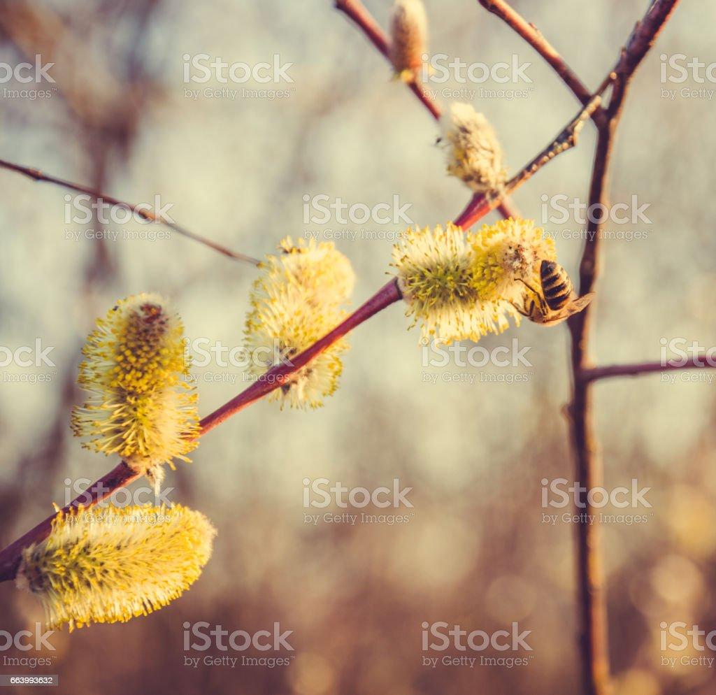 Весенняя открытка. Медоносная пчела и весенний луг stock photo