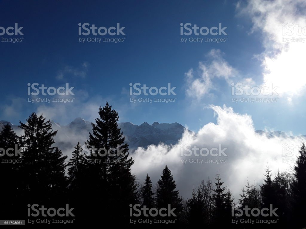 FOG FOREST stock photo
