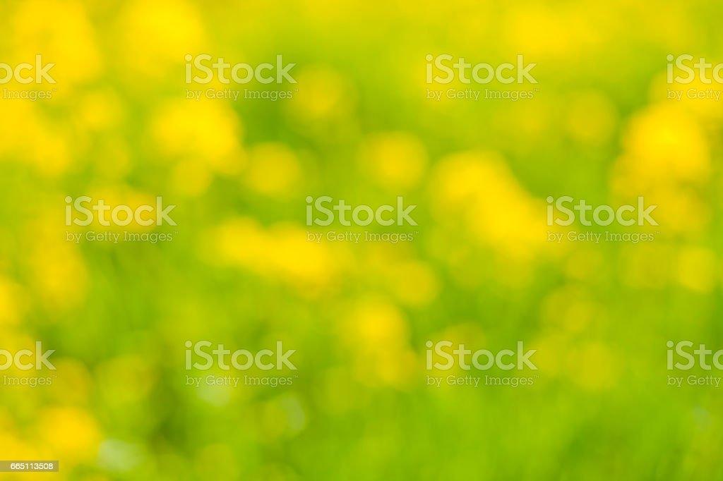 黄色の背景 stock photo