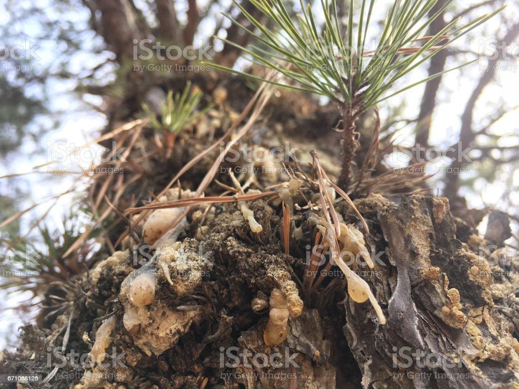 자연속의 풍경 stock photo