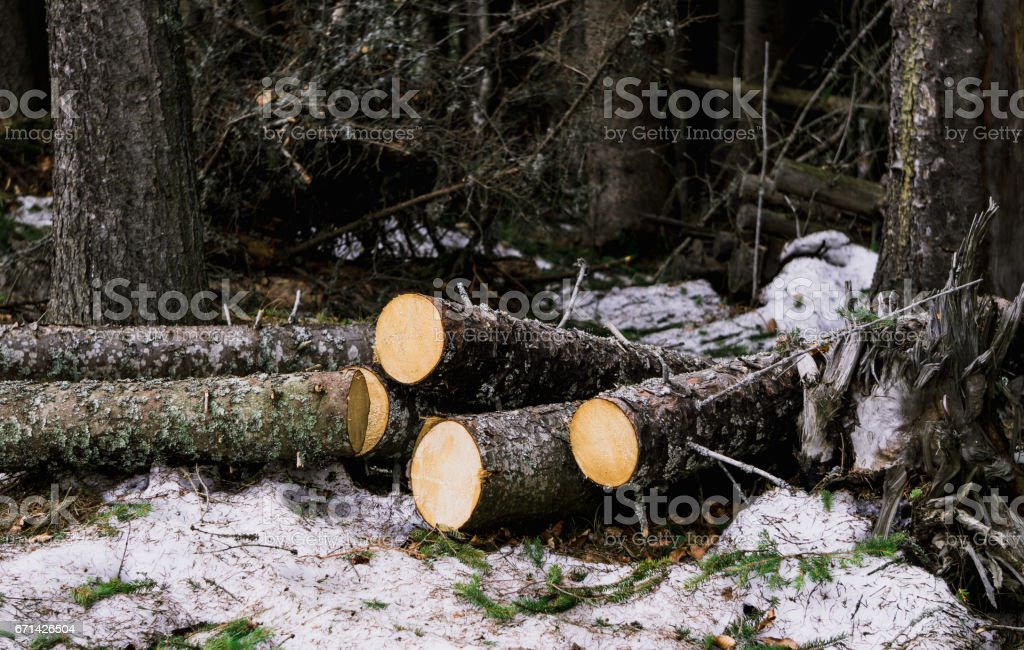 Живописная стопка дров в лесу. Дикая природа Восточной Европы stock photo