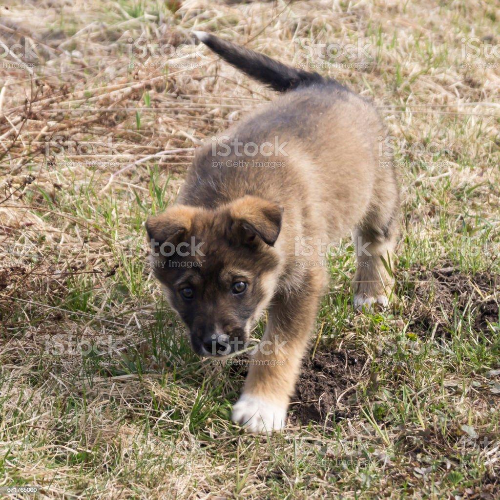 Щенок домашняя собаки stock photo