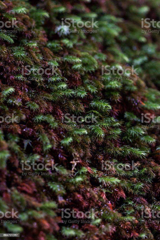 屋久島の苔 stock photo