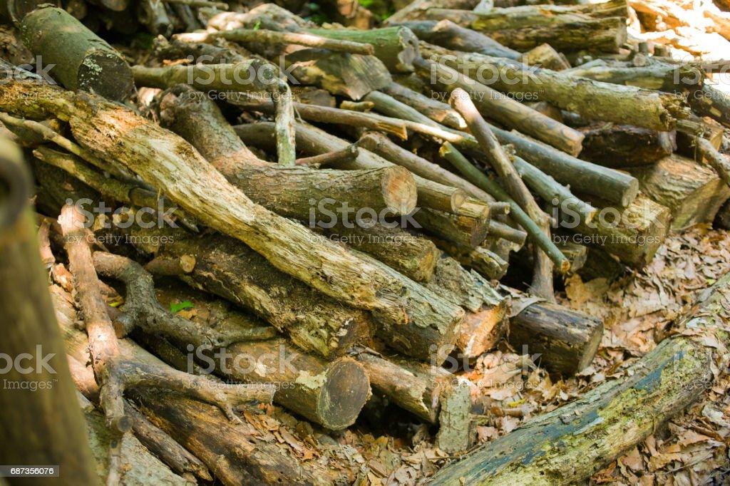 薪の山 森林 stock photo