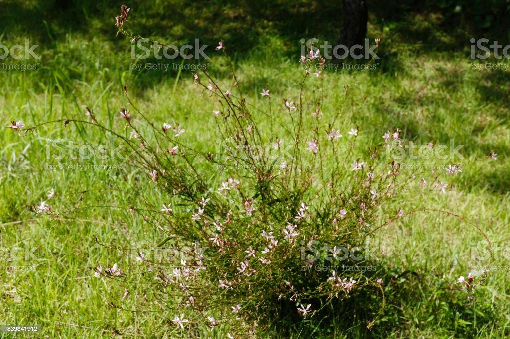 잔디밭 위에 핀 들꽃 stock photo