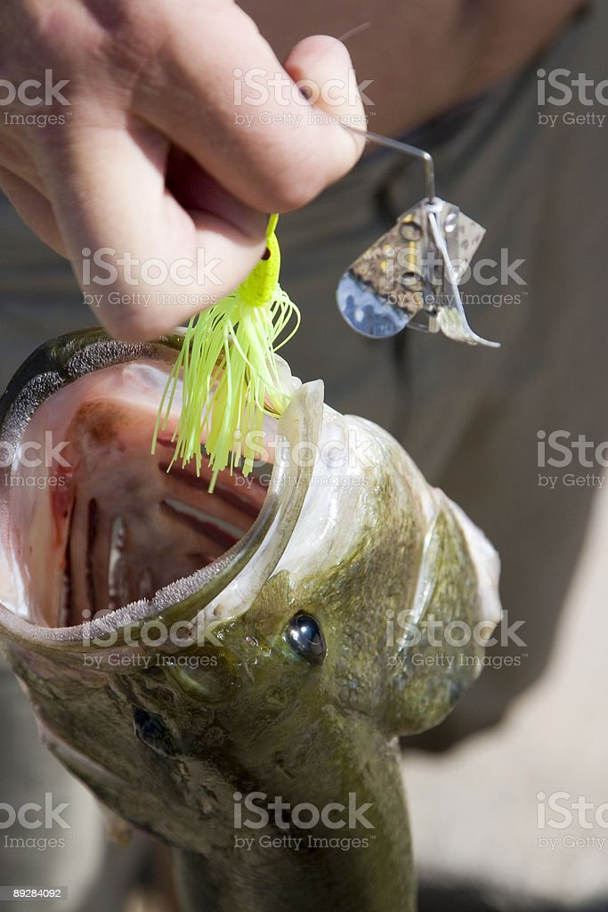 BASS (2 of 5) royalty-free stock photo