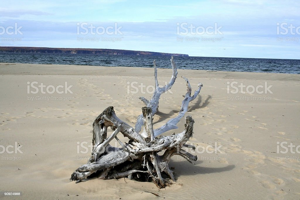 DEAD TREE ON SAND royalty-free stock photo