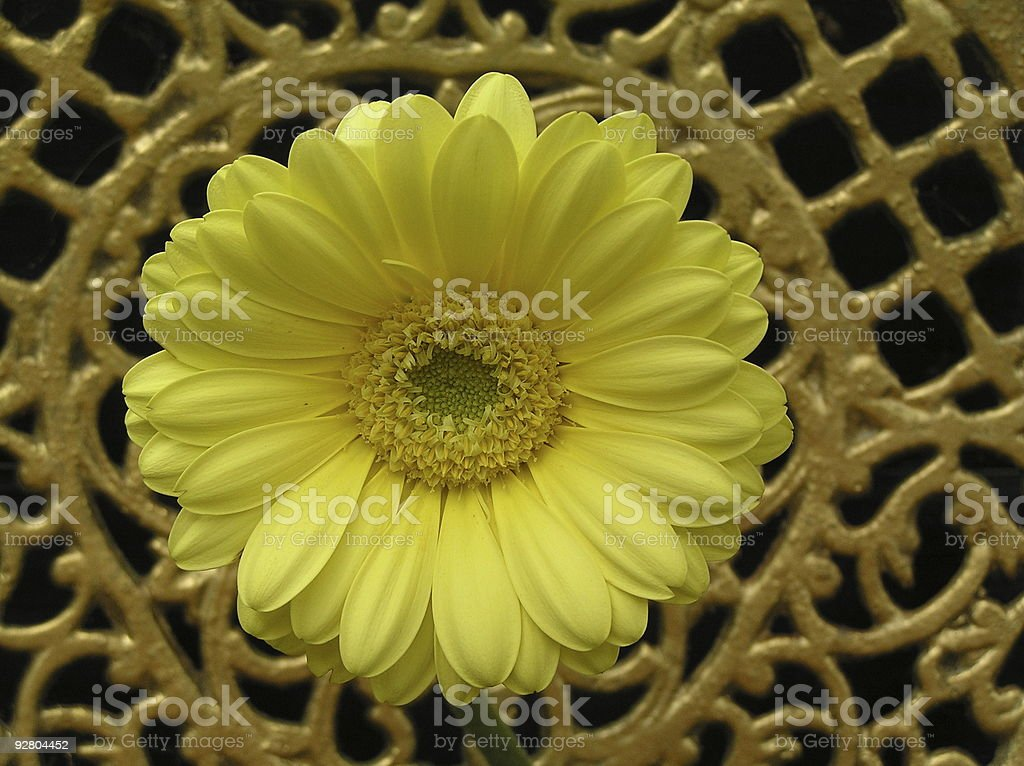 YELLOW AND GOLD royalty-free stock photo