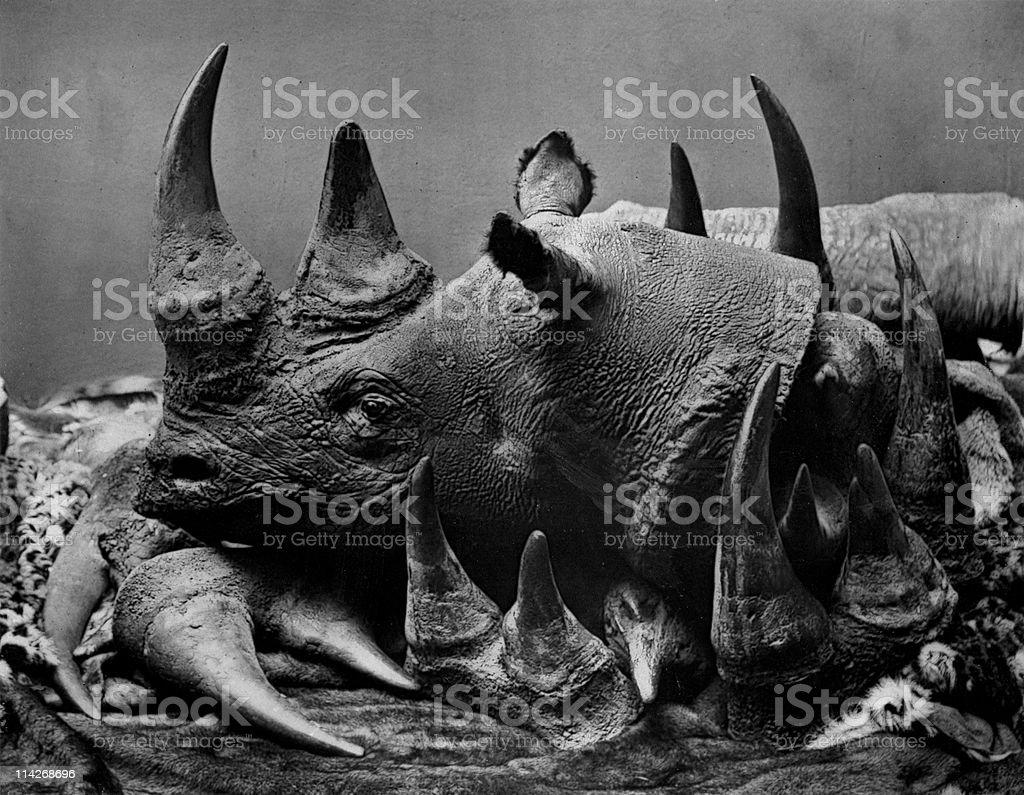 19th Century Poaching of Rhinoceros stock photo