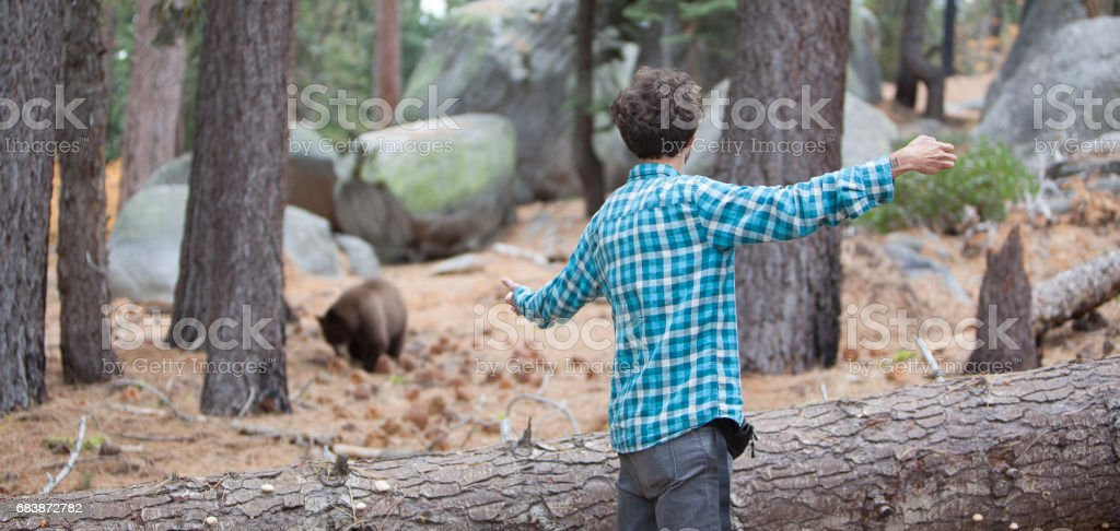 27-years-old man, tourist,  filming the young wild black american bear in the forest in Yosemite National Park stock photo