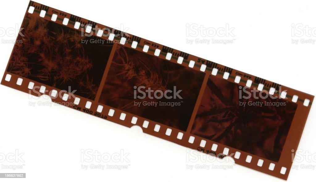 35mm royalty-free stock photo