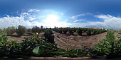 360-degree View orchard