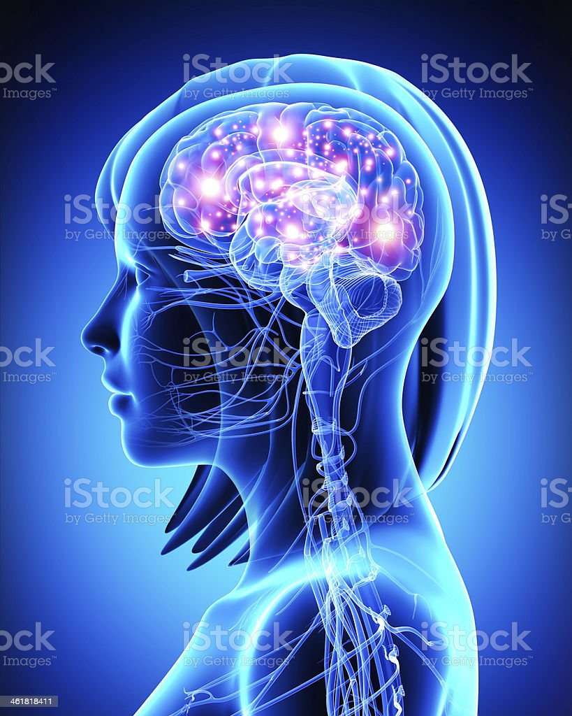 3d art illustration of female active brain stock photo
