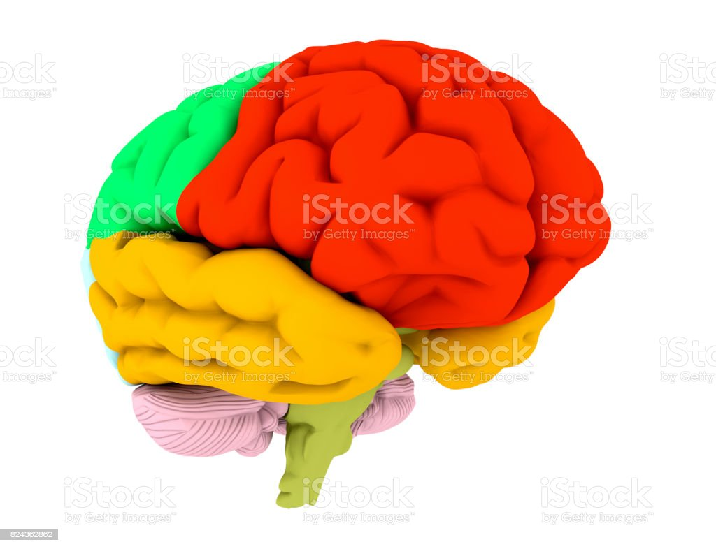 3d brain illustration and colored areas stock photo