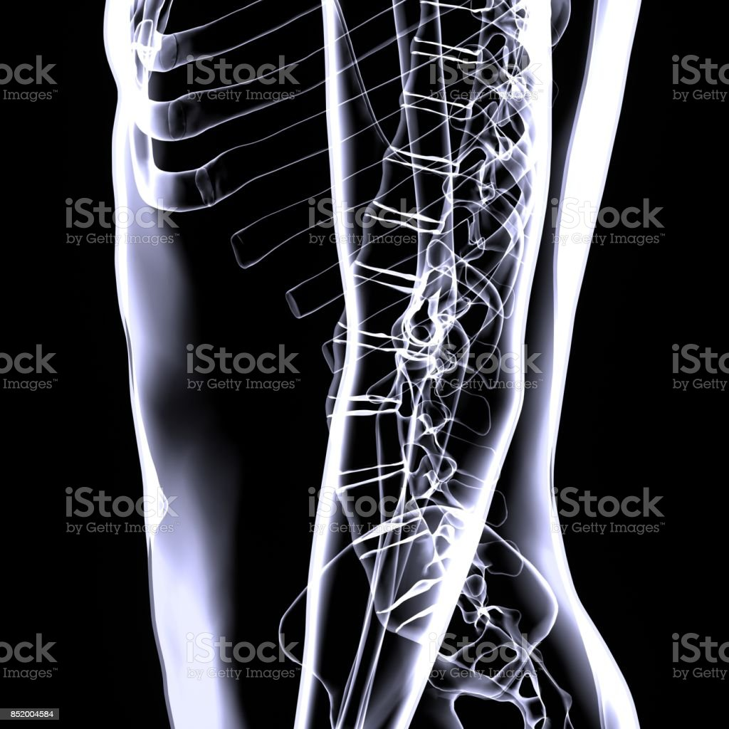 3d illustration of human body spinal card stock photo