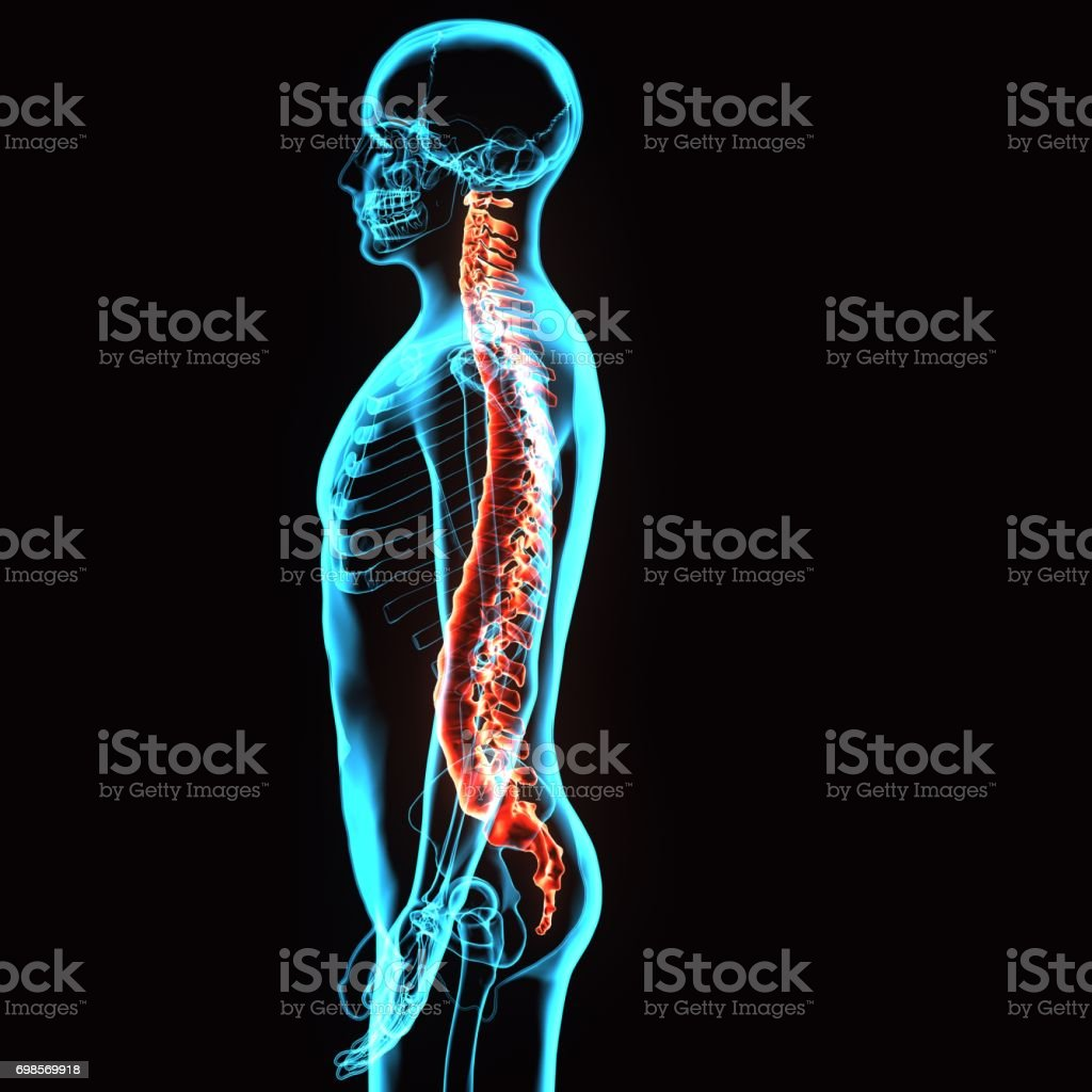3d illustration of human body spinal cord stock photo