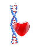 3d model dna strand with red heart