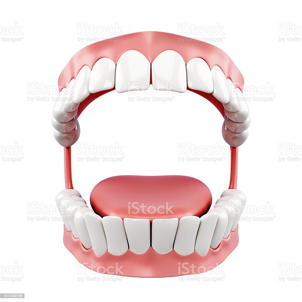 3d model of human jaw on a white background stock photo