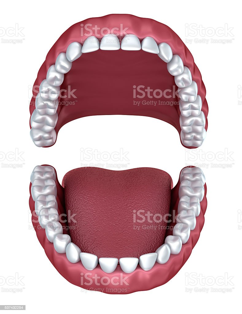 3d open denture isolated on white stock photo