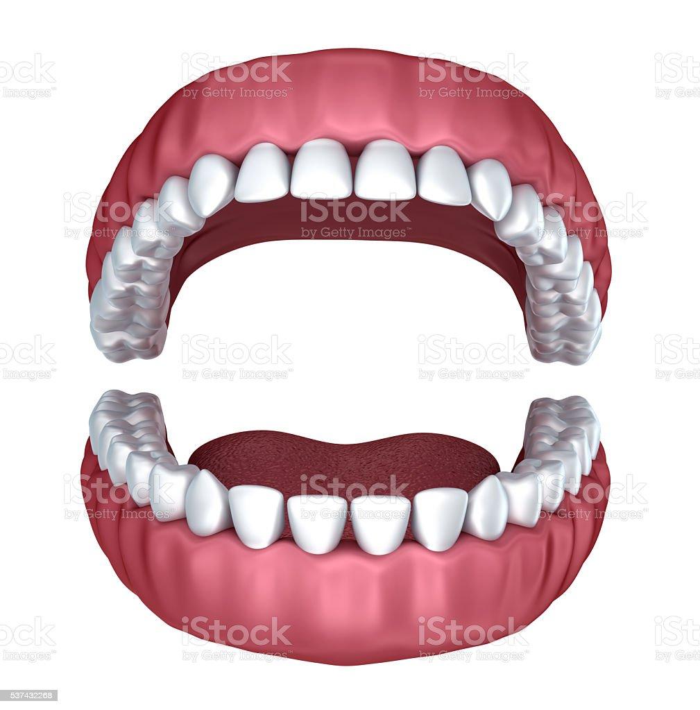 3d open denture isolated on white stock photo