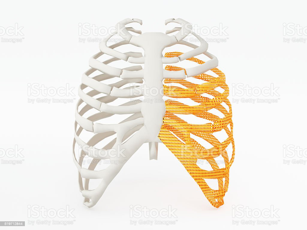 3d printed rib cage. 3d printed implants on white background.