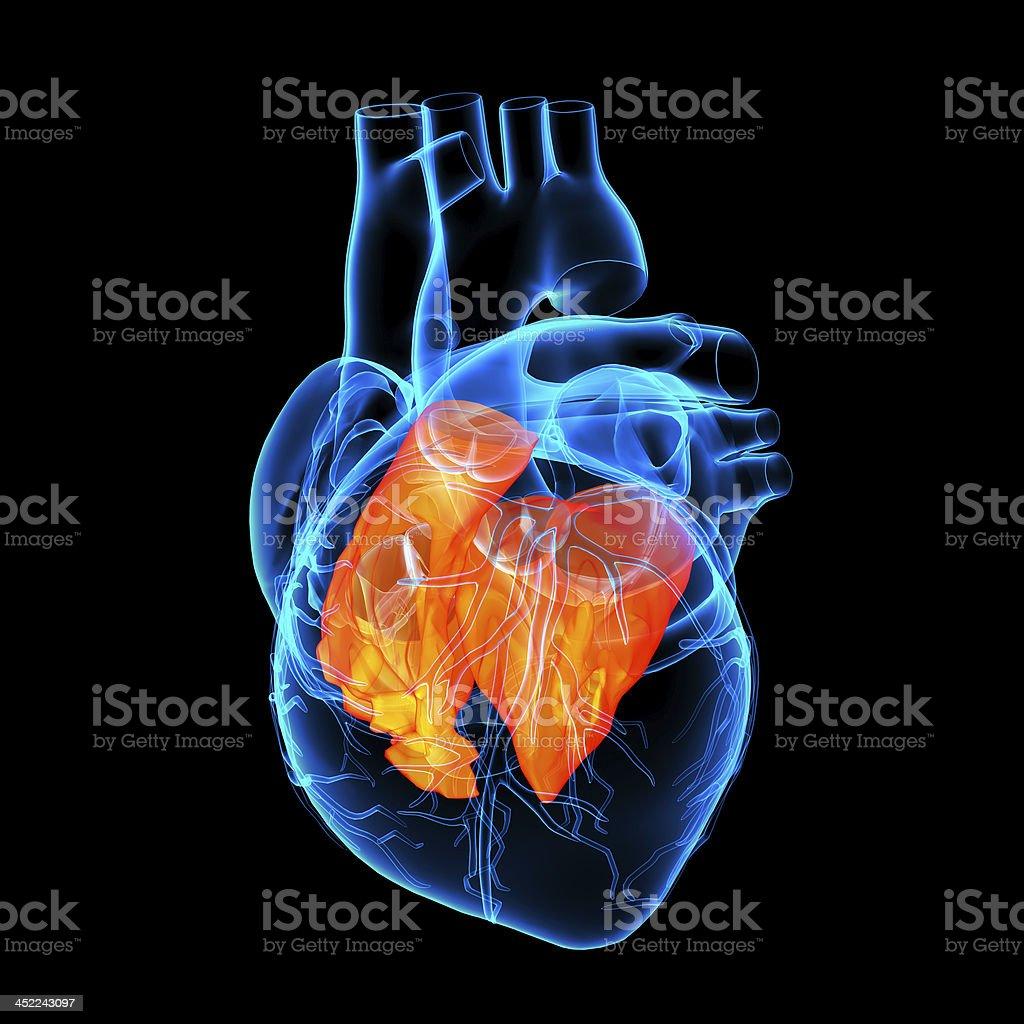 3d render Heart atrium stock photo