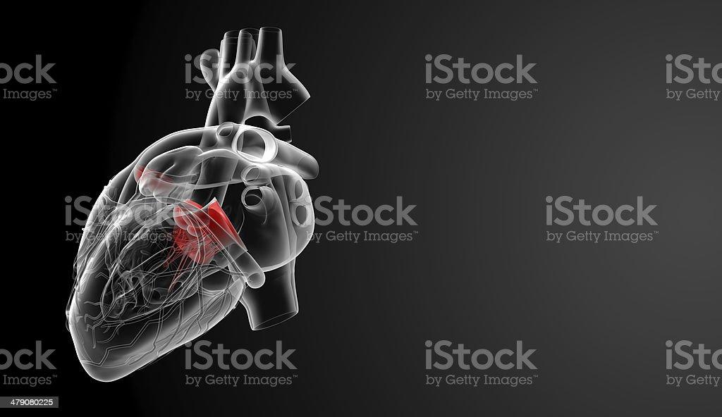 3d render Heart valve stock photo