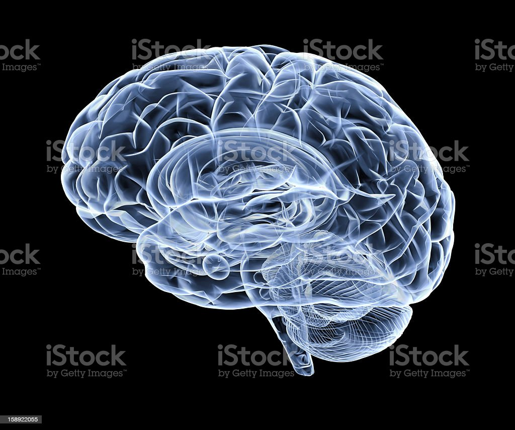 3d render human brain under x-ray stock photo