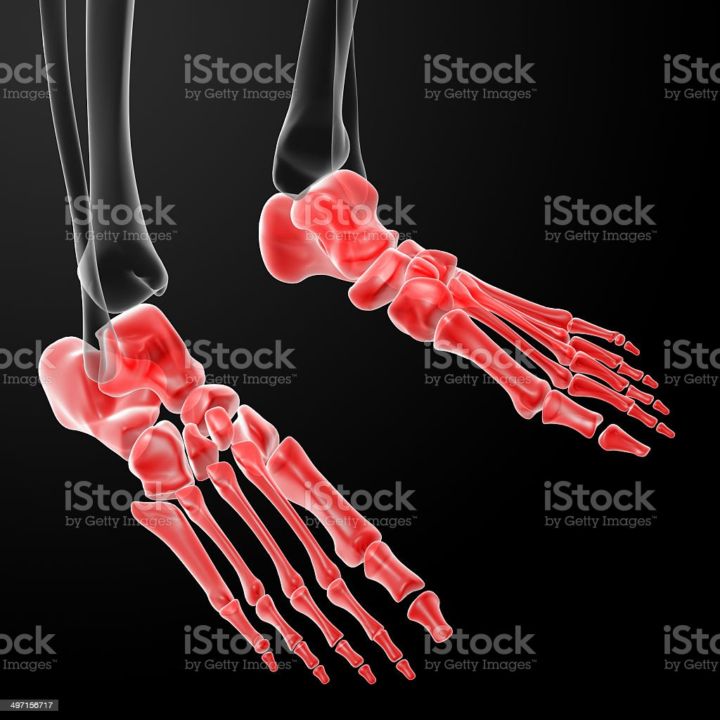 3d Render Human Foot Xray stock photo 497156717 | iStock