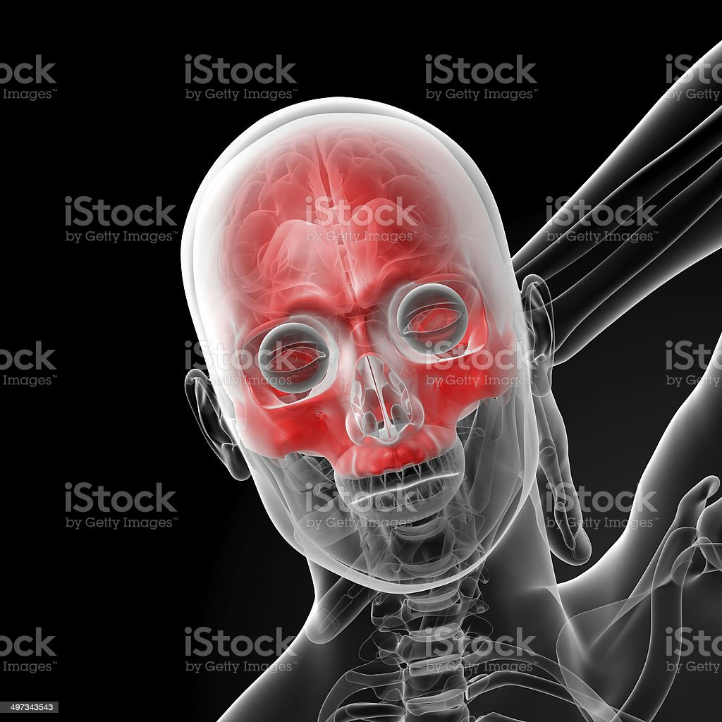 3d render human Skull. Upper half. stock photo