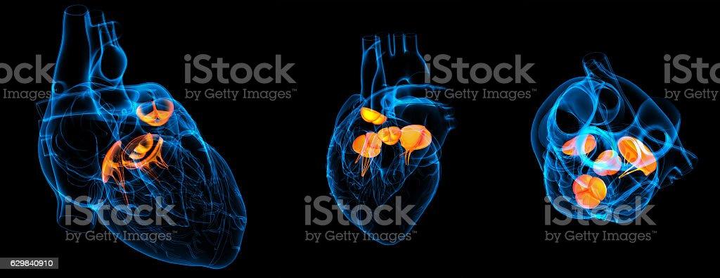 3d render illustration of the  Heart valve stock photo