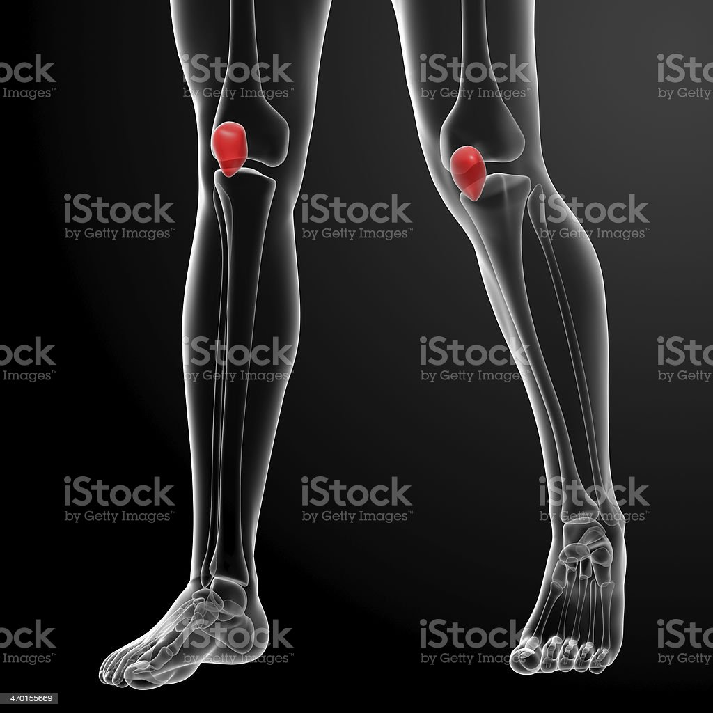 3d render illustration patella stock photo
