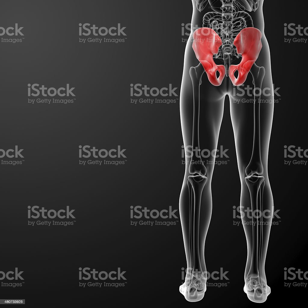 3d render illustration pelvis bone - back view royalty-free stock photo