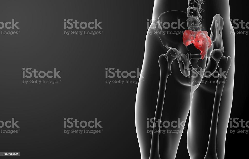 3d render illustration sacrum bone - back view stock photo