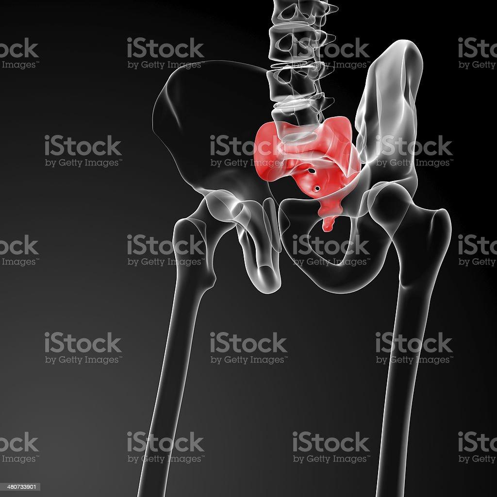3d render illustration sacrum bone royalty-free stock photo