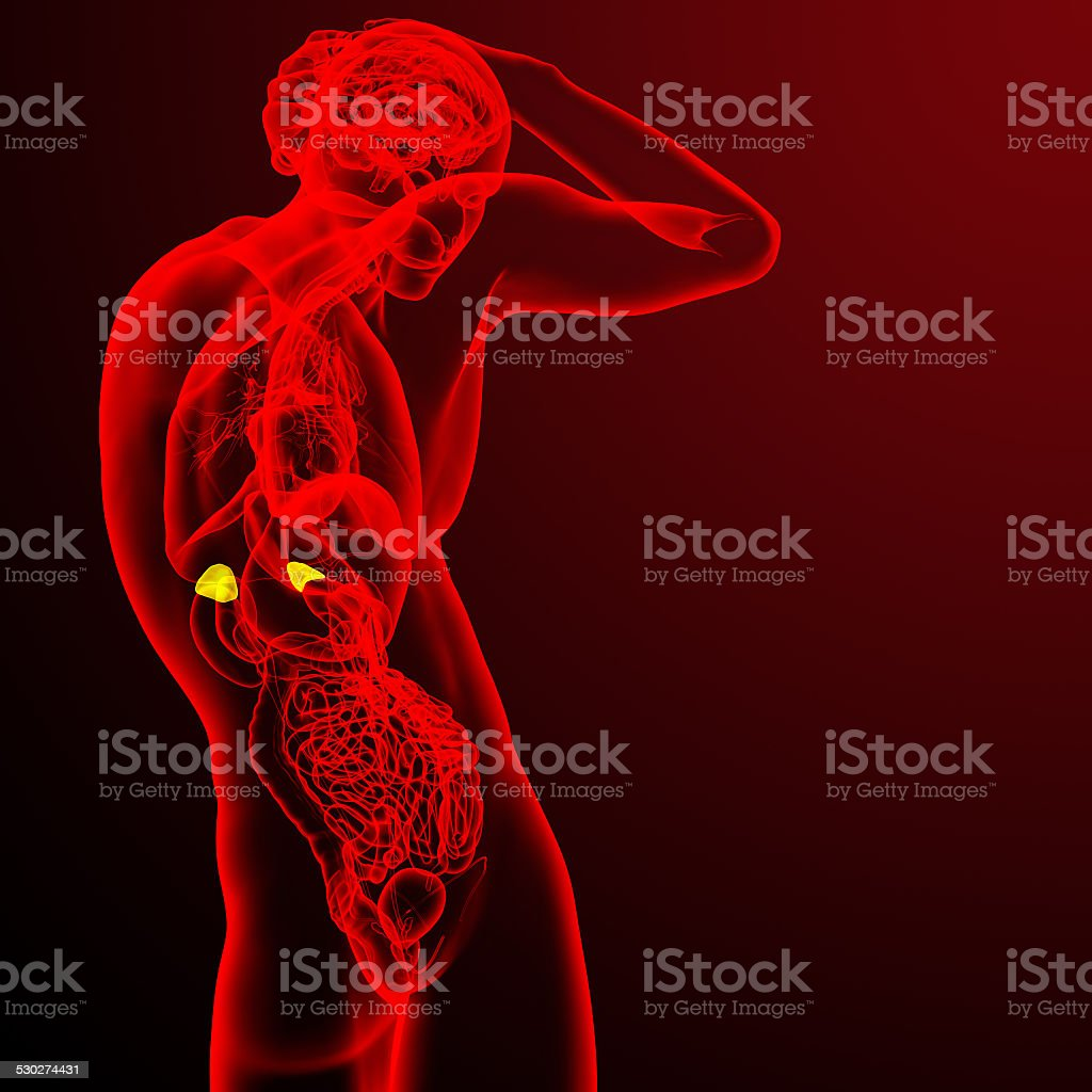 3d render medical illustration of the adrenal stock photo