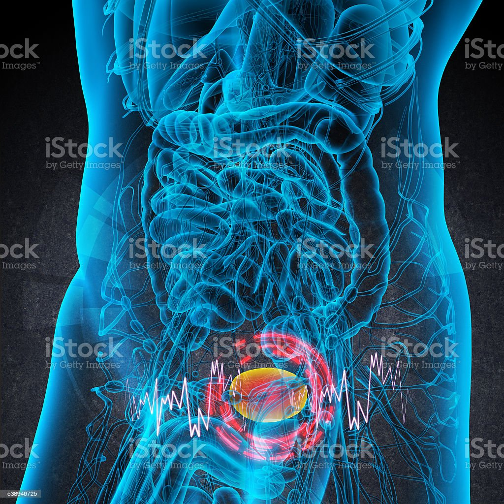 3d render medical illustration of the bladder pain stock photo