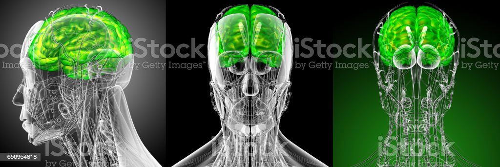 3d render medical illustration of the brain - side view stock photo
