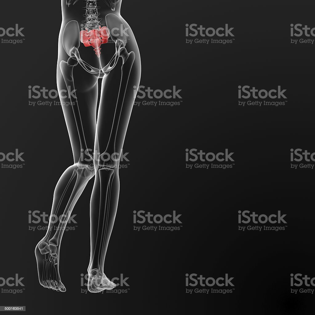 3d render medical illustration of the female sacrum bone royalty-free stock photo