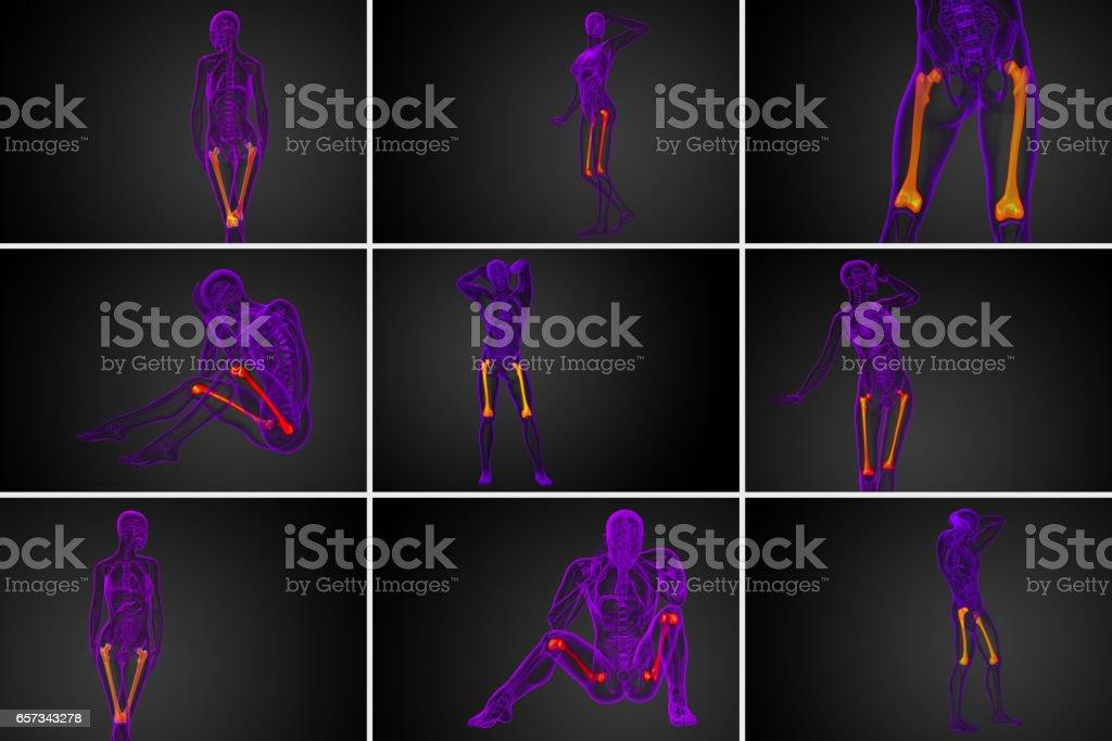 3d render medical illustration of the femur bone stock photo