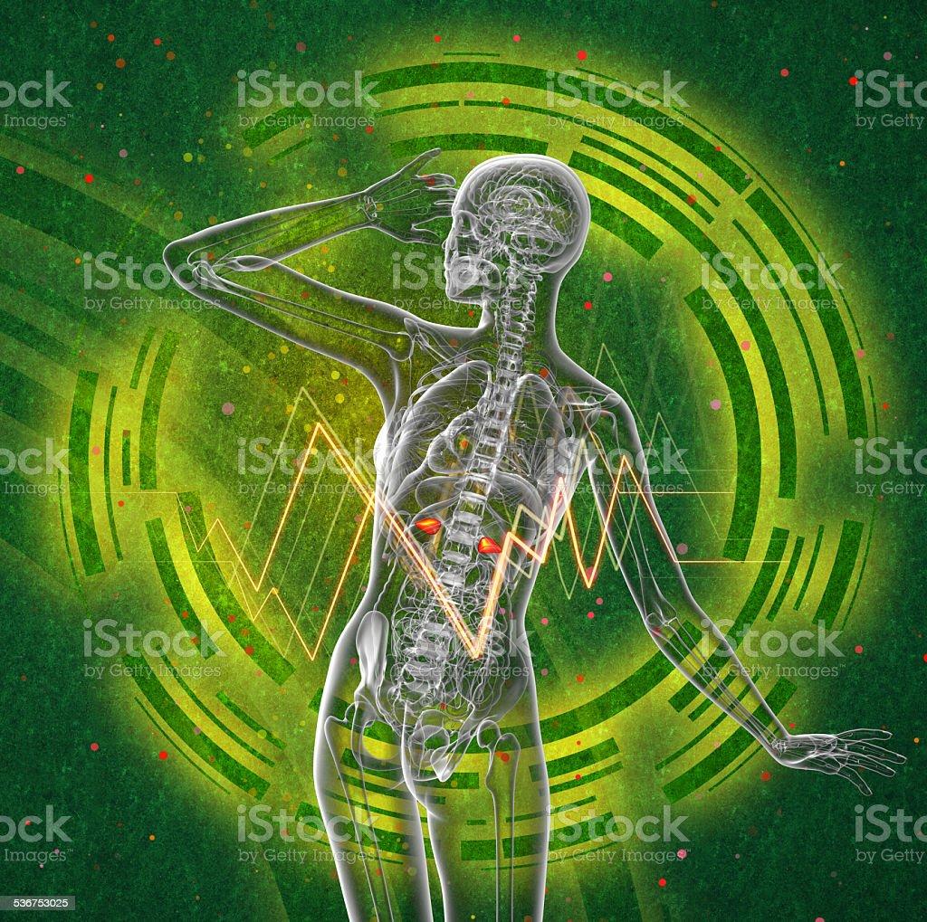 3d render medical illustration of the human adrenal glands stock photo
