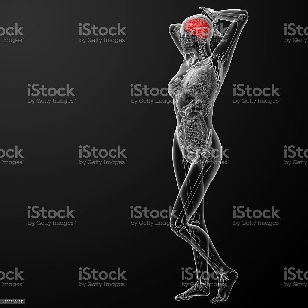 3d render medical illustration of the human brain stock photo
